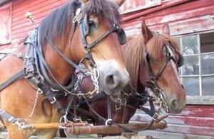 hästarpåsvenska